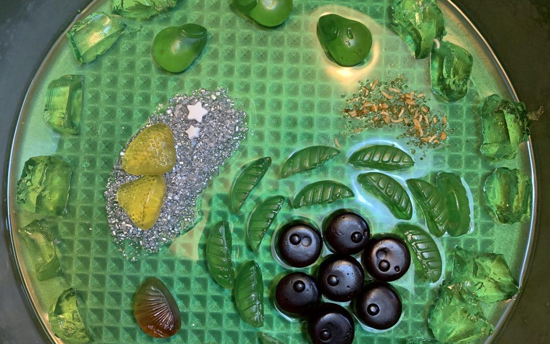 Bio: Schüler*innen entwerfen Pflanzenzellen